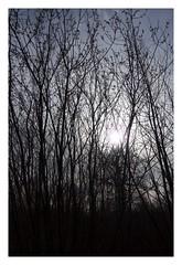 Good Morning (zelart) Tags: morning trees woods kent blean canterbury