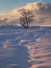 DSCF6801.jpg (mblonde12) Tags: britannia winter