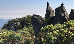 #MtTamalpais #Hike (Σταύρος) Tags: ontherock raven crows mounttamalpais twobirds blackcrows blackbirds ontherocks hike hiking marin californië california cali cal californie top mounttampalis mttamalpais sunnyday beautifulday marincounty millvalley mountain kalifornien kalifornia καλιφόρνια カリフォルニア州 캘리포니아 주 northerncalifornia カリフォルニア 加州 калифорния แคลิฟอร์เนีย norcal كاليفورنيا