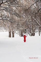 DSE_6521 (pezlud) Tags: 20190223 snow winter winterscenes trollwoodpark fargo nd usa landscape white mantleofwhite seaofwhite dashesofcolor color firehydrant