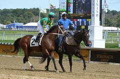 "2017-09-10 (10) r4 Jenn Miller on #2 I Just Wanna Win (JLeeFleenor) Tags: jockey جُوكِي ""赛马骑师"" jinete ""競馬騎手"" dżokej jocheu คนขี่ม้าแข่ง jóquei žokej kilparatsastaja rennreiter fantino ""경마 기수"" жокей jokey người horses thoroughbreds equine equestrian cheval cavalo cavallo cavall caballo pferd paard perd hevonen hest hestur cal kon konj beygir capall ceffyl cuddy yarraman faras alogo soos kuda uma pfeerd koin حصان кон 马 häst άλογο סוס घोड़ा 馬 koń лошадь outside outdoors photos photography md marylandracing maryland marylandhorseracing laurelpark laurelracecourse"