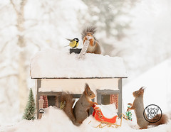 red squirrels and tit are standing with a house and wishing list (Geert Weggen) Tags: redsquirrel nut red squirrel acrobat animal back breaking broken cheerful colored concepts cracked cracker crushed cute dinner drink eating emotion food mess snow winter tree christmas house home roof bird tit titmouse greattit bispgården jämtland sweden geert weggen ragunda geertweggen hardeko