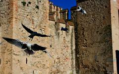 The flight (Franco-Iannello) Tags: nature animals landscape