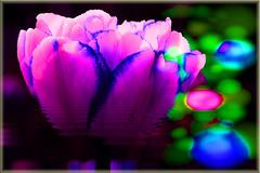 Tulip (seguicollar) Tags: imagencreativa photomanipulación art arte artecreativo artedigital virginiaseguí androide tulipán tulip mirror flower flor