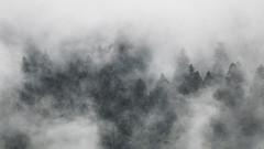 Mishmash (Jean-Luc Peluchon) Tags: fz1000 brume brouillard forest forêt arbre tree fog haze mist bois woods