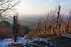 Winter sunset (picsessionphotoarts) Tags: nikon landschaft landschaftsfotografie landscapephotography bayern bavaria deutschland germany nikonphotography nikonfotografie ipsheim badwindsheim burghoheneck weinberge vineyards weinstöcke landscape nikond850 winter afsnikkor35mmf18g