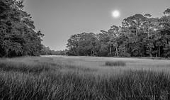 Super Moon (ted henderer | photography) Tags: moon supermoon seabrookisland thehaulover marsh tedhenderer lowcountry winter wintermarsh spartina grass southcarolina sc charleston