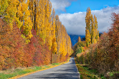 Speargrass Flats Road (near Arrowtown, New Zealand) (Trey Ratcliff) Tags: arrowtown autumn dalefield newzealand stuckincustomscom treyratcliff trees fall yellow red orange leaf leaves hdr hdrtutorial hdrphotography hdrphoto aurorahdr road car truck