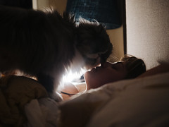 Lisa & Epstein (Zack Huggins) Tags: olympusomdem5markii panasonicleicadgsummilux25mmf14 vscofilm pack01 dallastx oakclifftx cat kitty catto kitter kitten meow portrait candid bokeh dof microfourthirds pet profile backlight