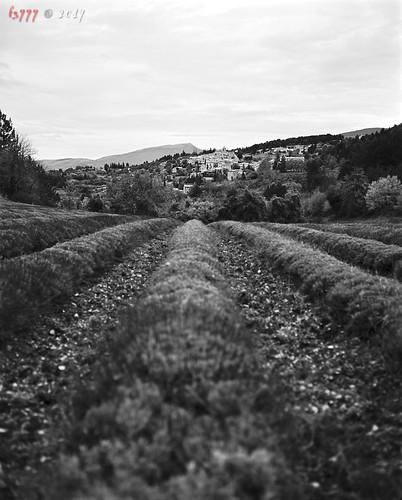 Lavender Village [explored]