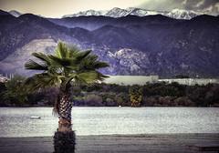 Surf and Ski (mcook1517) Tags: water tree palmtree mountain snow lake hills sand sunset