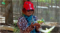 birds attack……. (Jinky Dabon) Tags: fujifilmfinepixhs35exr birds parakeets smallbirds beak pellets smalltropicalparrots longtails brightlycoloured paraquet