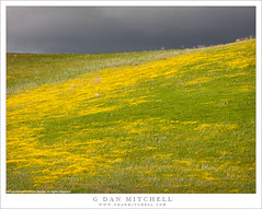 Spring Growth, Stormy Sky (G Dan Mitchell) Tags: stormy dark sky clouds hill yellow flowers wildflowers grass spring season nature landscape green carrizo plain nationalmonument ridge california usa north america