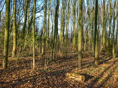 December light (sander_sloots) Tags: trees bomen park december winter light sunlight tall vroesenpark forest rotterdam shadows schduw