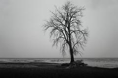 Desolation (Eric Tischler) Tags: 850nm infrared ohio lake erie huntington winter