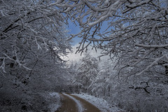 nature and forest (iron_doji) Tags: georgia nature forest amazing photo fujifilmxe1 18135mm beautiful nice fujifilm lechkhumi snow frost photography way snowyroad trees turtledtrees sky
