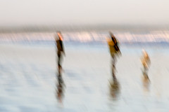 Beach impressions (Marion McM) Tags: beach figures people three longexposure blur intentionalblur intentionalcameramovement impressionistic reflections sand waves sea st andrews fife scotland canoneos760d 2019 abstract