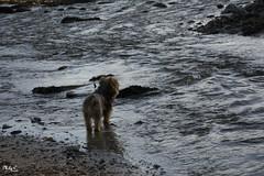 Mirar el mar me relaja....!!! (Camelia-5) Tags: ria ares coruña perro mar