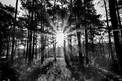 A morning in the woods (Iso_Star) Tags: sony ilce6500 pz18105mmf4g alpha 6500 bw monochrome morgen morning wald woods forrest natur nature sonne sonnenstrahlen sun