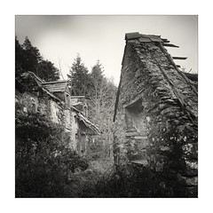 cartref (gerainte1) Tags: hasselblad501 pancro400 film blackandwhite house home ruin cartref wales snowdonia woodstrees