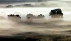 Misty morning (ᗰᗩᖇᓰᗩ ☼ Xᕮ∩〇Ụ) Tags: mistymorning neblig landscape moments momente motion trees weather wetter morning morgens landschaft bäume felder fields greece mediterranean griechenland westpeloponnese westpeloponnes ελλαδα ελλασ δυτικηπελοποννησοσ στιγμεσ ομιχλη πεδιαδα δεντρα μεσογειοσ τοπιο καιροσ πρωι canoneos1100d winter χειμωνασ mysticmood serenity gelassenheit γαλήνη nature natur earth erde φυση naturelover