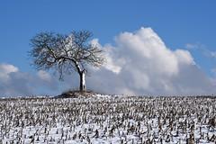 L'arbre solitaire (Excalibur67) Tags: nikon d750 sigma globalvision contemporary 100400f563dgoshsmc paysage landscape arbre tree nature nuages ciel cloud sky snow blanc white