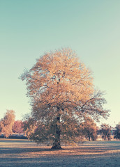Autumn tree (David Lundvall) Tags: colors autumn tree sweden stockholm canoneos7d