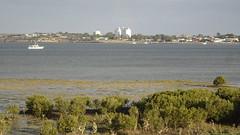 0336 Streaky Bay (roving_spirits) Tags: australia australien australie southaustralia eyrepeninsula