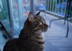 DSC04088-3 (iocatco) Tags: cat kitten cats sony a7