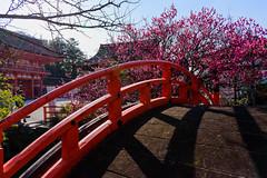 DSC_0134 (ponkiti3) Tags: 下鴨神社 京都 梅 植物 風景