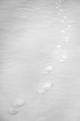 On Foot (belleshaw) Tags: blackandwhite oakglen losriosrancho nature snow field footprints cold winter freshsnow walking hiking crunch detail abstract texture