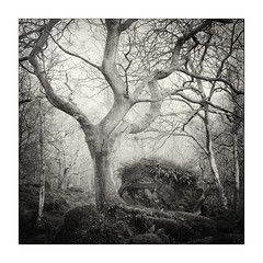 Ash and Block (gerainte1) Tags: hasselblad501 portra400 colour blackandwhite film trees woodland winter yorkshire silverefx