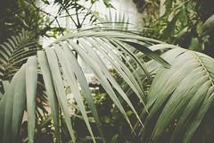 GLASSHOUSE V (DASxTESAPECK) Tags: dark plant pflanze light bokeh natur gewächshaus glasshouse color colour darkgreen green focus fokus kassel wilhelmshöhe winter stimmung nature