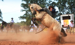 Matheus Quevedo e Marginal (Eduardo Amorim) Tags: gaúcho gaúchos gaucho gauchos cavalos caballos horses chevaux cavalli pferde caballo horse cheval cavallo pferd pampa campanha fronteira quaraí riograndedosul brésil brasil sudamérica südamerika suramérica américadosul southamerica amériquedusud americameridionale américadelsur americadelsud cavalo 馬 حصان 马 лошадь ঘোড়া 말 סוס ม้า häst hest hevonen άλογο brazil eduardoamorim gineteada jineteada