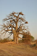 Burkina Faso Africa