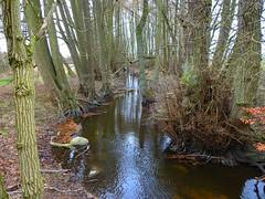 der Hammerbach unter Bäumen (Sophia-Fatima) Tags: boissow mecklenburgvorpommern deutschland klosterweg nonnenweg hammerweg bantin