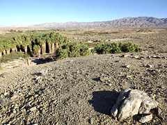 thousand palms oasis from hilltop (h willome) Tags: 2018 desert coachellavalleypreserve