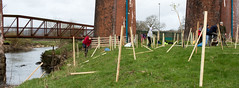 Tree planting, Whalley 04