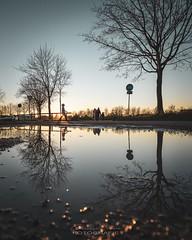 N A T U R  •  M I R R O R (Nowak Christoph) Tags: ortenaukreis blackforest schutterwald goldenestunde golden himmel schild bäume baum abend sonnenuntergang sonne sun pfütze spiegel 1635 weitwinkel zeiss a7rii alpha sony