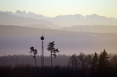 Signal tower (Tjaldur66) Tags: signaltower tower pinetrees view panorama mountains swissmountains swissalps winter telephoto landscape outdoor