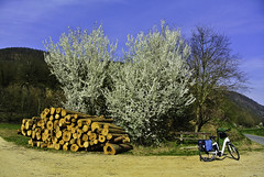 (Kat-i) Tags: frühling spring blütenstrauch bloomingbush natur nature fahrrad bicycle holz wood bäume trees himmel sky weg path outside nikon1v1 kati katharina 2019