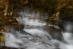 silk (mercedescasal) Tags: efectoseda silk paisaje rio naturaleza bosque invierno arboledalandscape river forest grove winter nikon7200 filtrond galicia