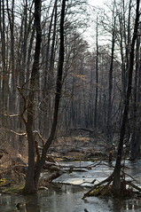 The swamp. (ALEKSANDR RYBAK) Tags: изображения лес болото природа вода речушка деревья солнечный свет тени отражение дымка пейзаж forest images swamp nature water rivulet trees solar shine shadows reflection haze landscape