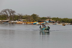 Fishermen and baobab - Pêcheurs et baobab (happybirds.ch) Tags: gambie gambia afrique africa ouest west nature thegambia happybirds life vie viequotidienne dailylife pêcheur fisherman baobab tree arbre