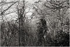 im korkus 290 (beauty of all things) Tags: eschweiler imkorkus wald forest dschungel jungle gestrypp gestrüpp scrub