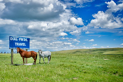 FM96 (Clint Everett) Tags: nature horses sky clouds hills montana landscape wild travel summer field