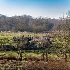 Naturschutzgebiet Volksdorfer Teichwiesen (1:1)