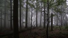 *** (pszcz9) Tags: polska poland przyroda nature natura nationalpark parknarodowy świętokrzyskie las forest deszcz rain mgła fog mist beautifulearth sony a77 pejzaż landscape