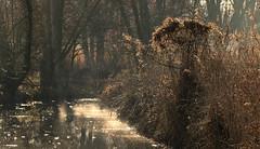 Diamonds of the sun (roland_tempels) Tags: water supershot bazel belgium naturereserve nature