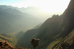 Sunbath (frederic.conte) Tags: kolukkumalai tea estate kerala tamil nadu ghats mountain montagne india inde plantation sun sunrise soleil levé light lumière valley vallée nature pic peak panorama morning matin